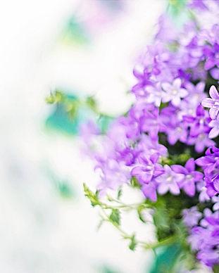 purple-flowers-2191635_1920.jpg