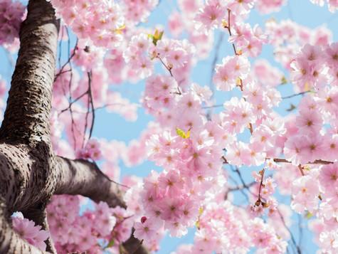 Kleines Frühlingserwachen im Tanzsalon