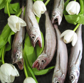 Fishes and Tulips