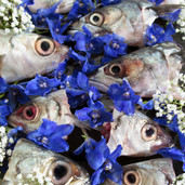 Fish Heads with Flowers