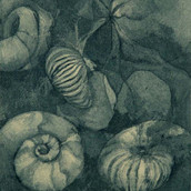 Memory of Ammonites II