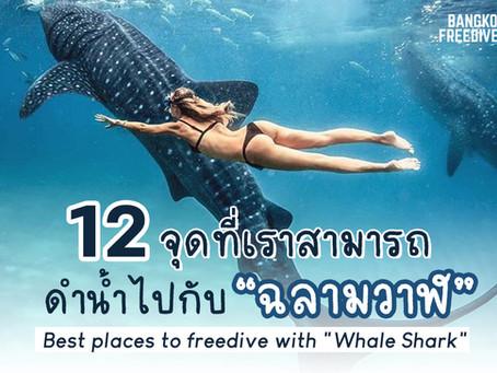 """12 จุดที่เราสามารถ ดำน้ำไปกับ """"ฉลามวาฬ"""""""