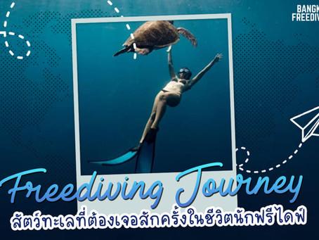 Freediving Journey with Marine Animals สัตว์ทะเลที่ต้องเจอสักครั้งในชีวิตนักดำน้ำ