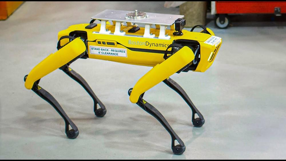 Fluffy cane robot della boston dynamics, corsi di inglese, corsi di francese, lezioni di inglese, lezioni di francesescuola di lingua a monza,
