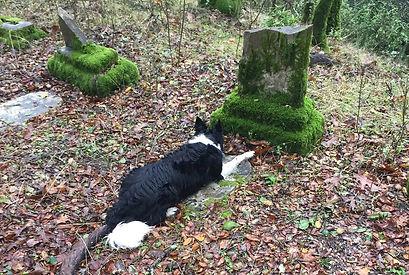 Jett at cemetery.jpg