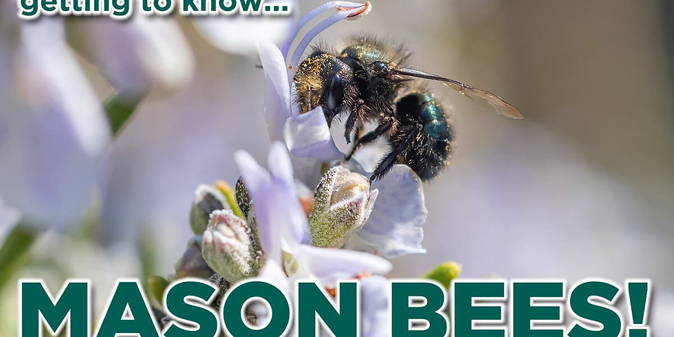 May Bee Club Meeting
