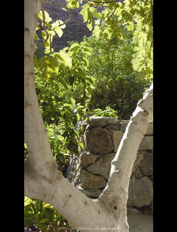 24_muro_de_piedras