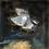 Thumbnail: Moth (Diptychy)
