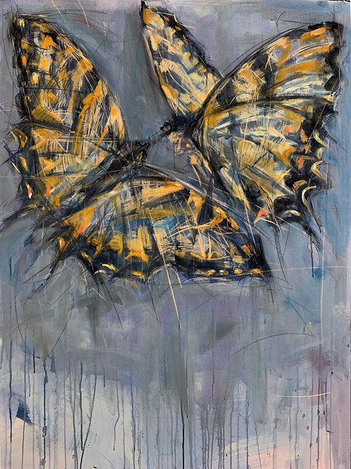 Western Tiger Swallowtails
