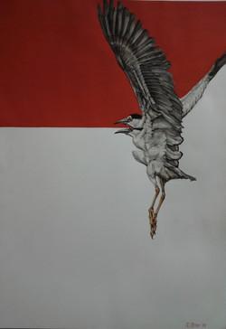 DESCENDING BIRD