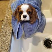 Tegan-Bath-Time.jpeg