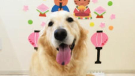 【おひさま動物病院】ノミ・マダニの早めの予防を忘れないで!!楽しいお散歩シーズンの到来♪♪