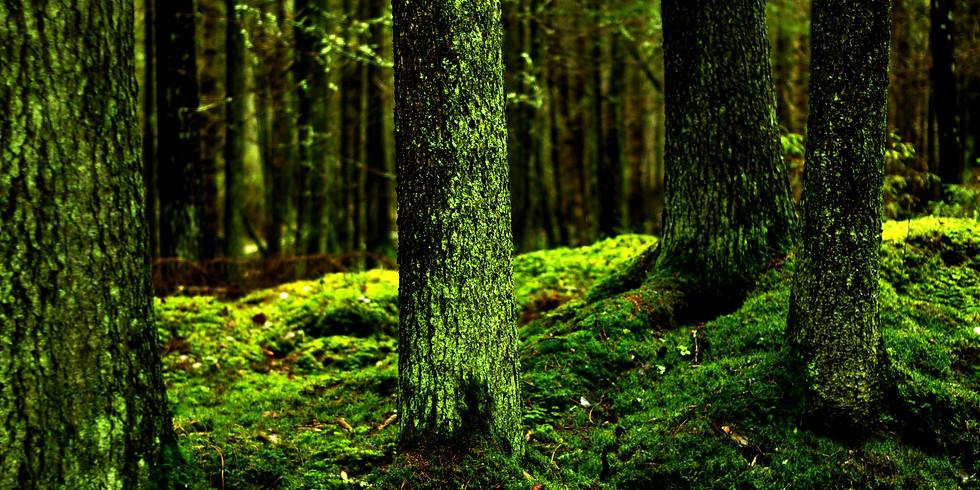 Shamanismin polulla - Luonnon henget ja kasvien parantava voima