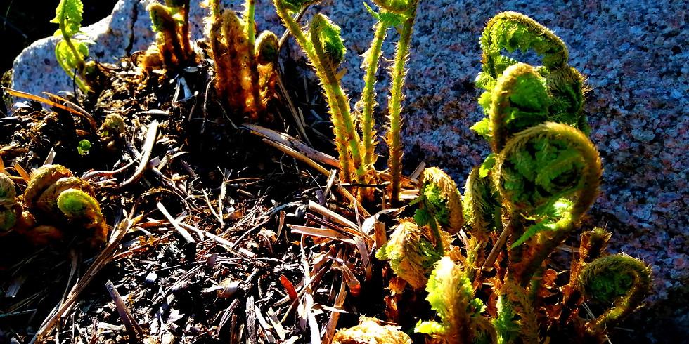 Shamanistinen rumpupiiri - Kevät
