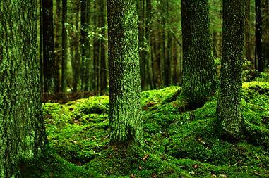 metsä1.jpg