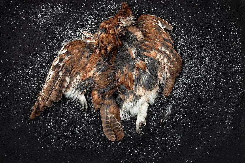 Salt and Skin: Screech Owl