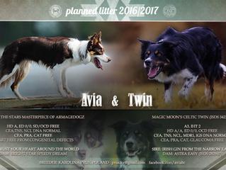 Planowany miot Avia&Twin