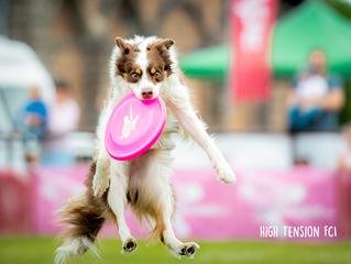 Podsumowanie sezonu frisbee 2019