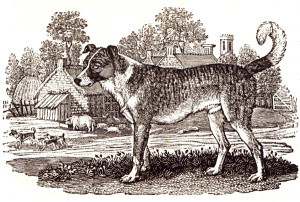 ban dog