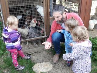 Nous avons rendu visite à nos amies les poules