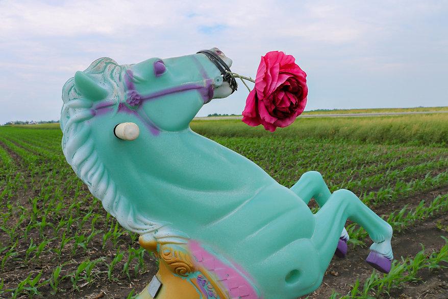 Prairie Equine