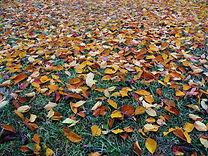 abstract-autumn-autumn-colours-265519 (1