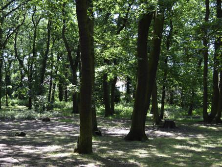Protecting Biggin Woods