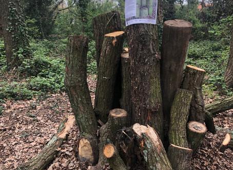 News about Biggin Wood