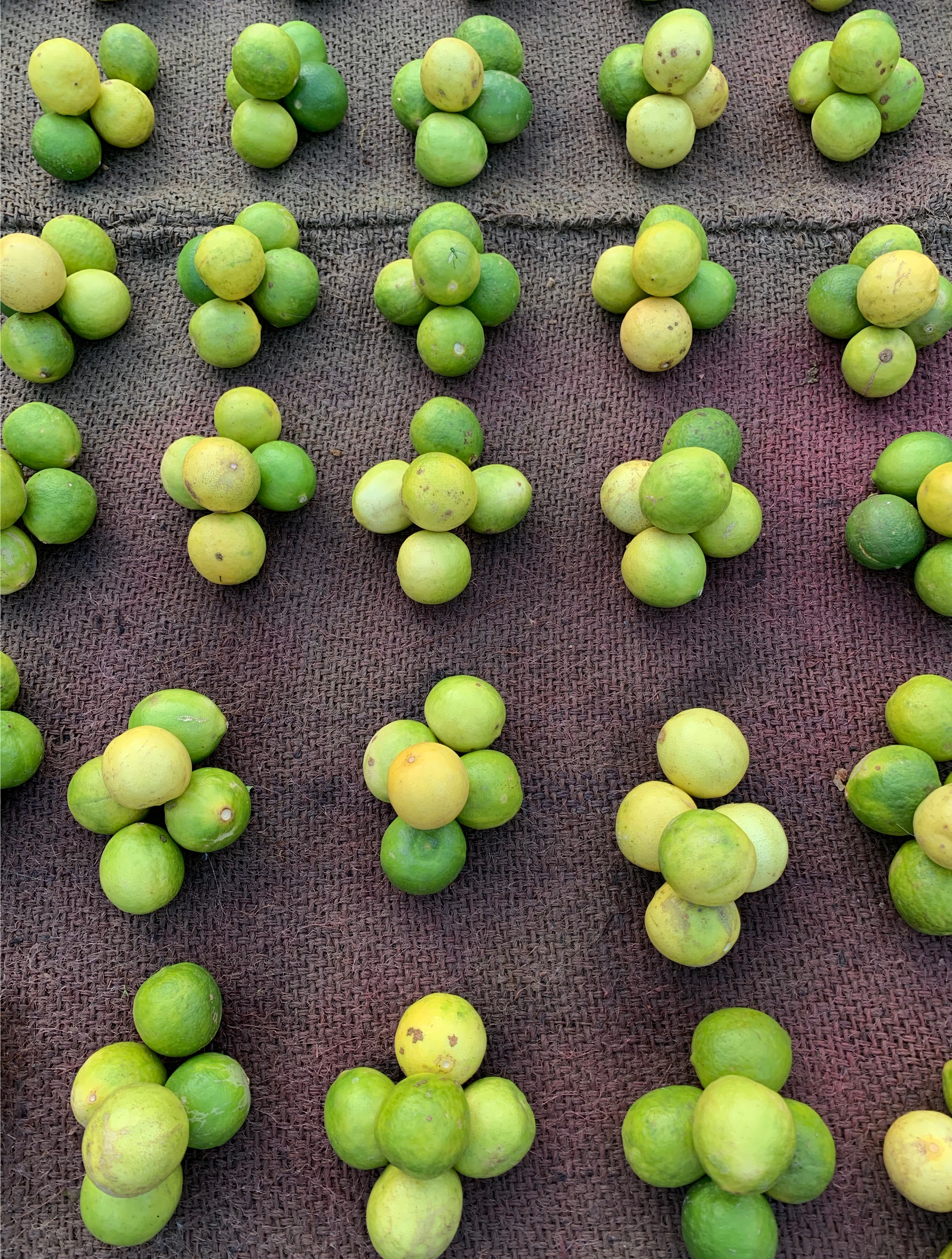 Limes-Final.png