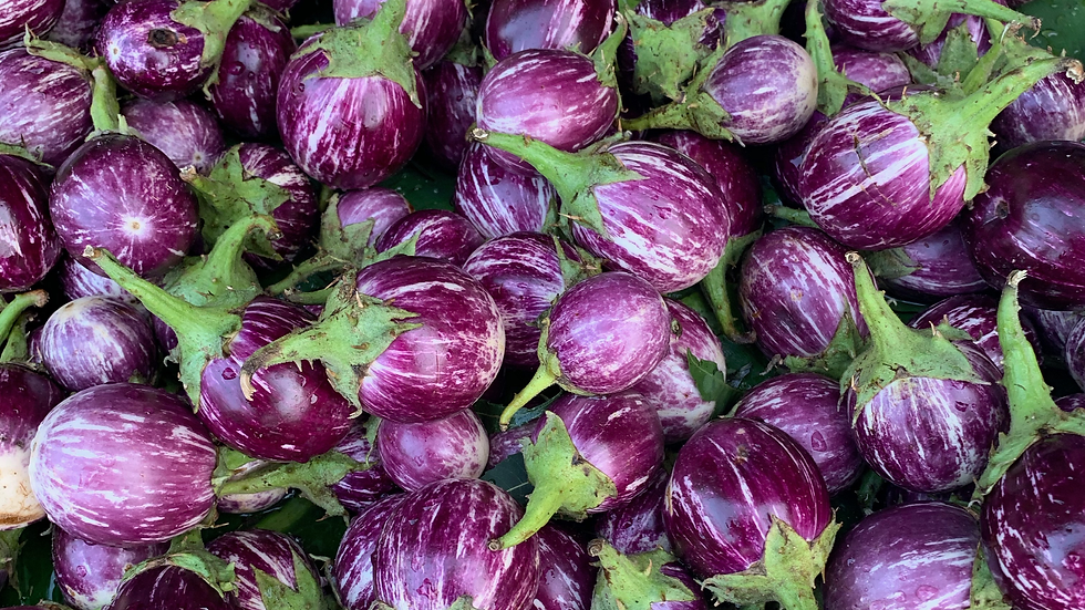 Eggplant-India
