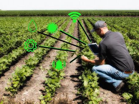 Tracciabilità digitale. L'innovazione a sostegno della filiera agricola.
