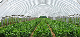 strawberry-field-3318639_1920 b.jpg