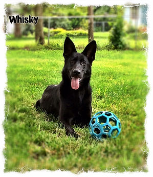 whiskey-ball.JPG