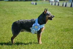 ACD showing