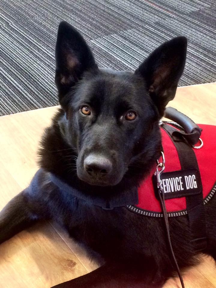 Sheena Service Dog Training