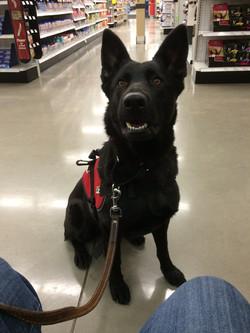 Sheena sevice dog training