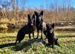 Sheena, Whisky, and Lexi
