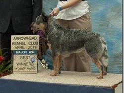 Arrowhead Kennel Club show