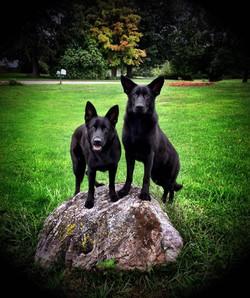 Sheena and Wisky