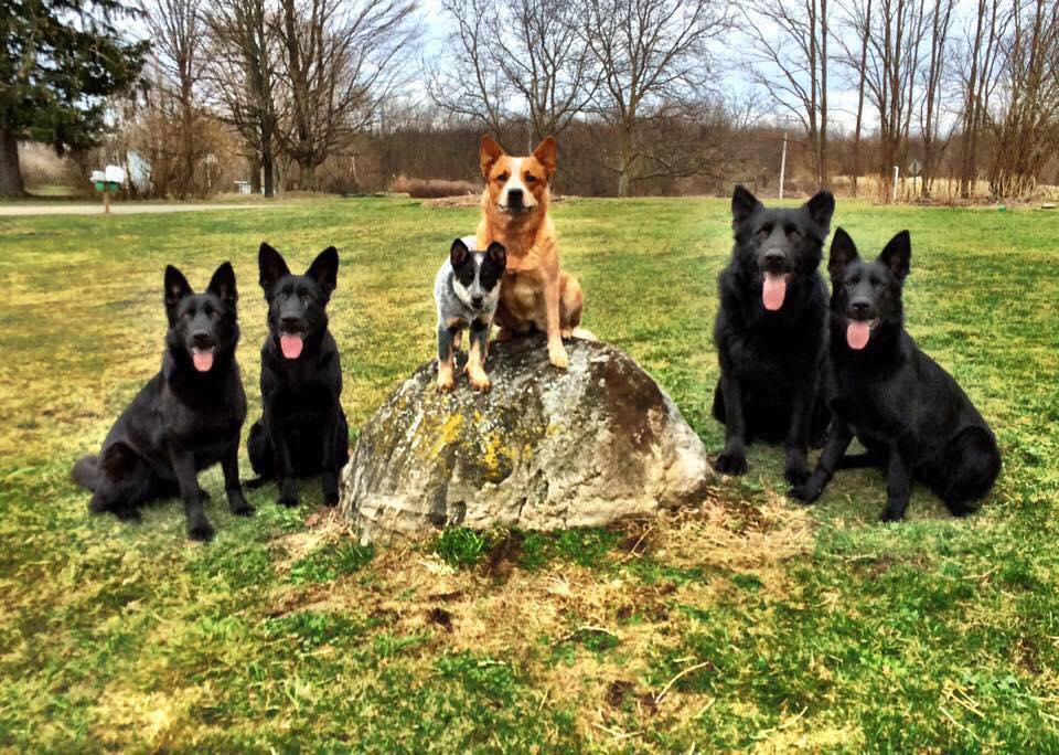 GSDs and ACDs