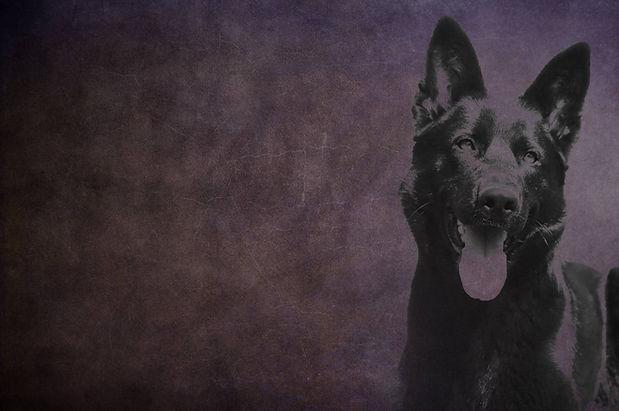 bg-purple-sheena.jpg