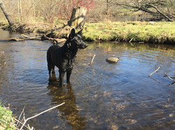 GSD time in the water