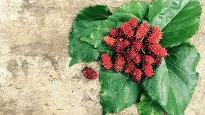Mulberry : A safe alternative for skin brightening