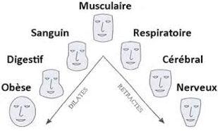 Morpho-physiologie