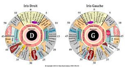 Carte d'iridologie