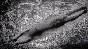 swim2-Edit-Edit.jpg
