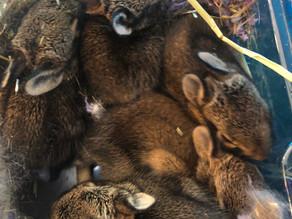 Rescuing Bunnies Part 1