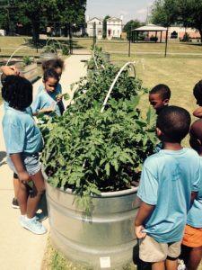 Community Garden Horizon 1st grade 2016