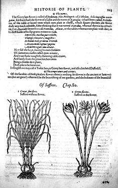 La Storia delle piante