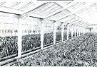 観葉植物 農場
